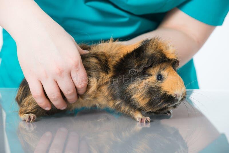 Проверка ветеринара стоковые фото
