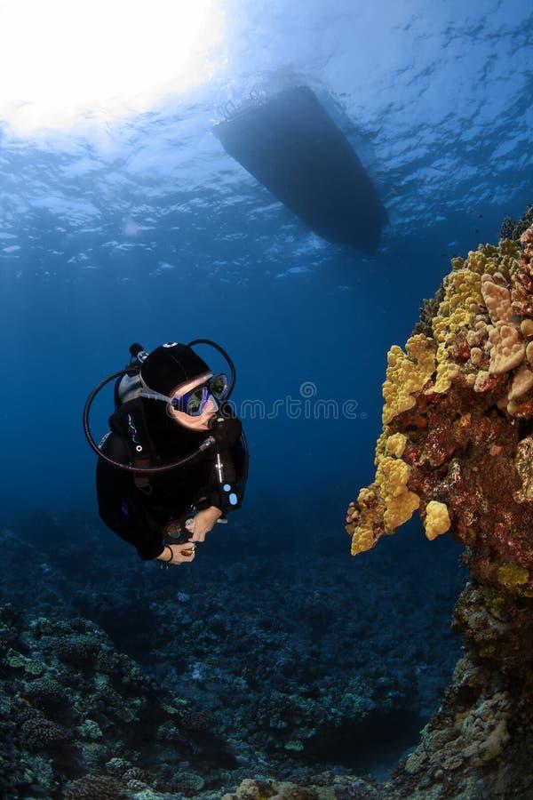 проверяющ образования водолаза коралла вне некоторые необыкновенные стоковые фотографии rf