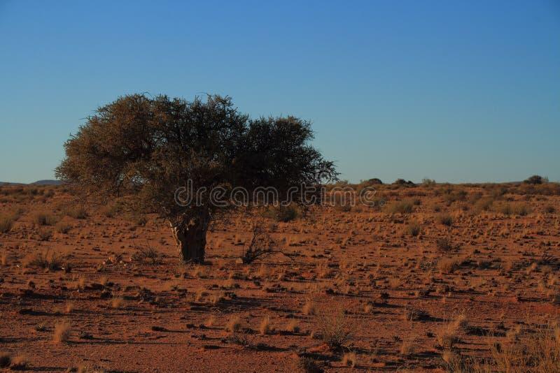 Провинция накидки Namaqualand ландшафта северная Южной Африки стоковые фотографии rf