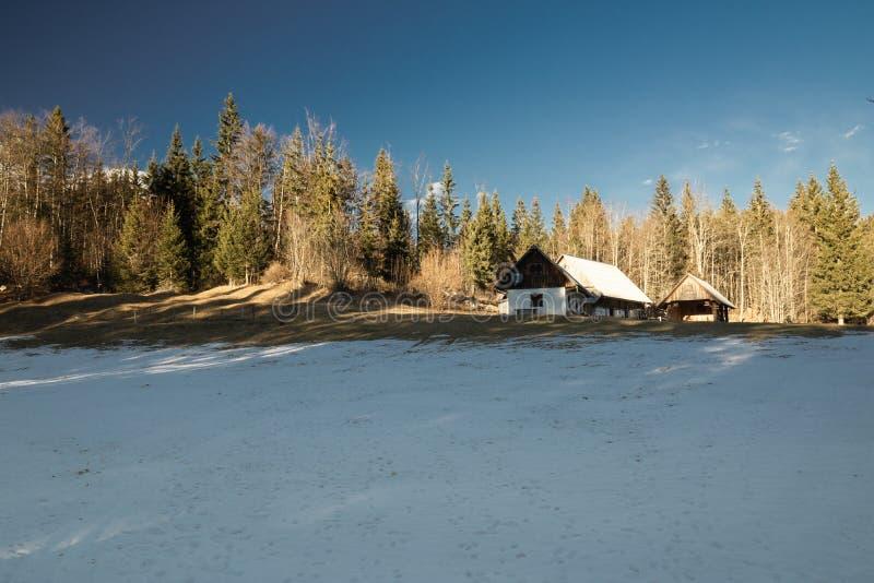 Проводить каникулы в доме шале горы леса горы в идилличной высокогорной окружающей среде, uskovnica, Словения стоковое фото