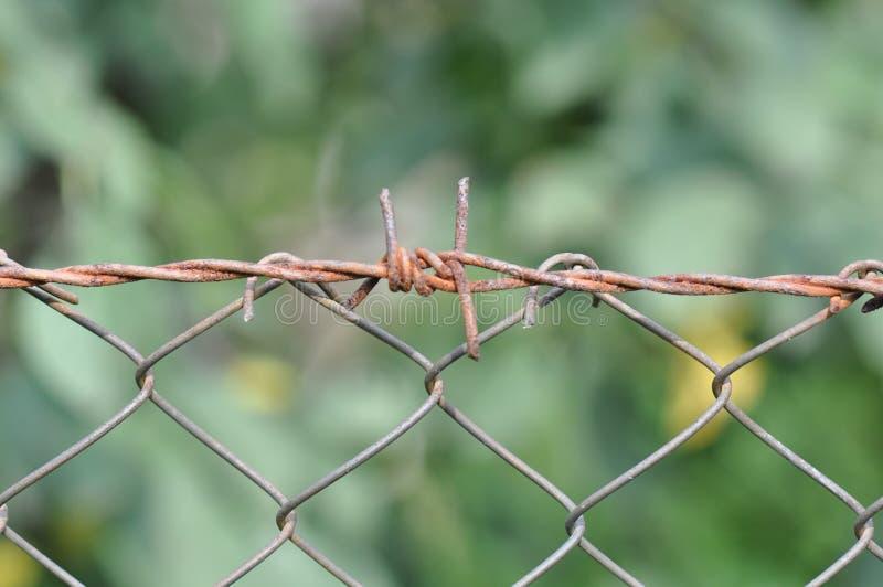 Провод колючки стоковая фотография