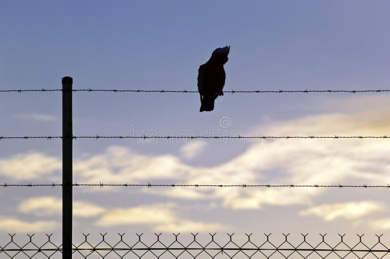 провод silhouetted птицей стоковые изображения