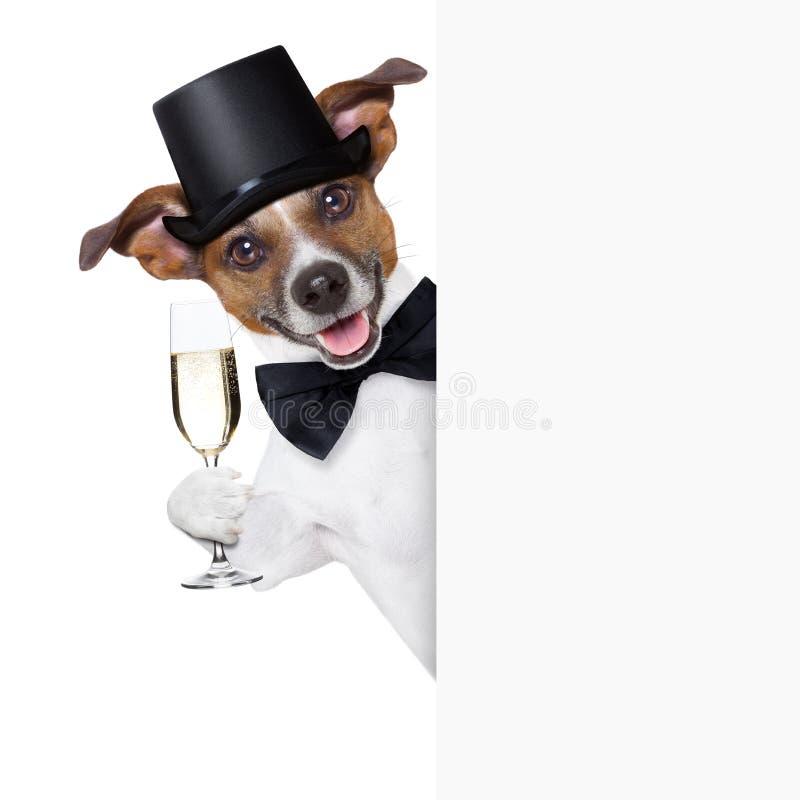 Провозглашать собаки стоковое изображение rf