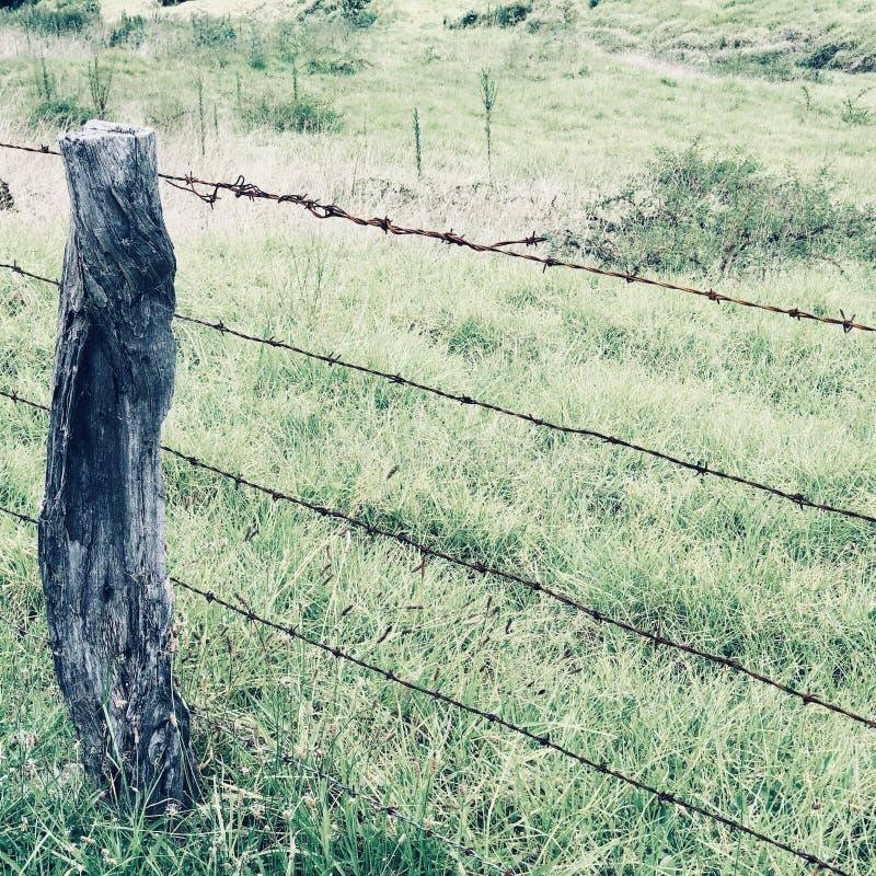 Проволочная изгородь колючки в Kula на Мауи стоковые фотографии rf
