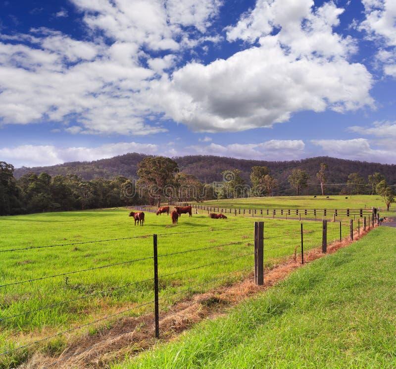 Проволочная изгородь скотин фермы BTops стоковое изображение