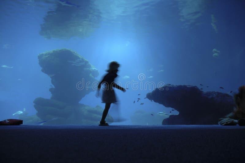 прогулка аквариума стоковые изображения rf