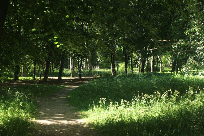 Прогулка к Korolev Взгляд парка больницы стоковые фото