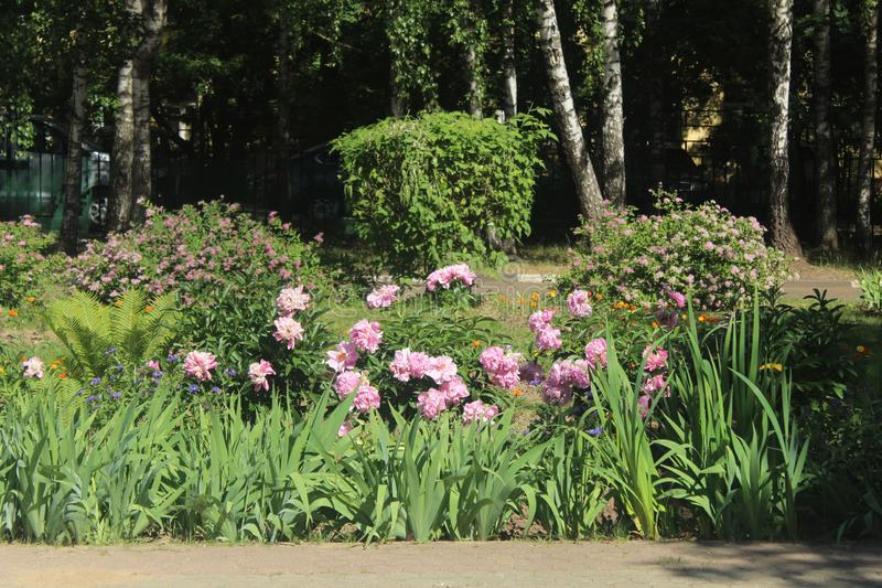 Прогулка к Korolev Школа цветков 15 стоковое фото rf
