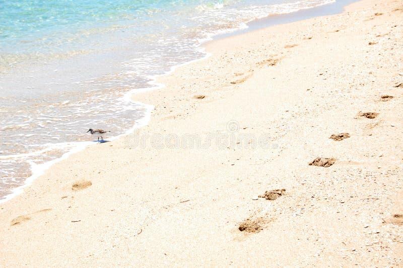 Прогулка на пляже стоковое изображение