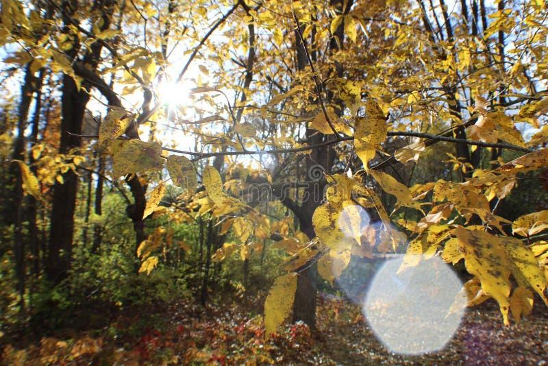 Прогулка падения в парке стоковые изображения rf