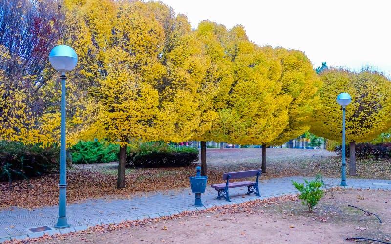 Прогулка по парку с деревьями осенью стоковое изображение