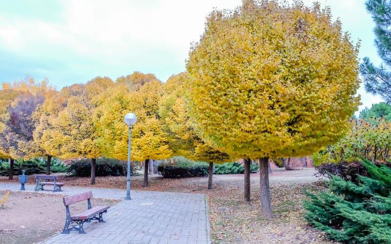 Прогулка по парку с деревьями осенью стоковые фото
