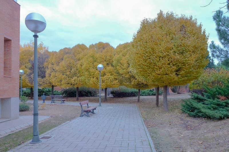 Прогулка по парку с деревьями осенью стоковая фотография