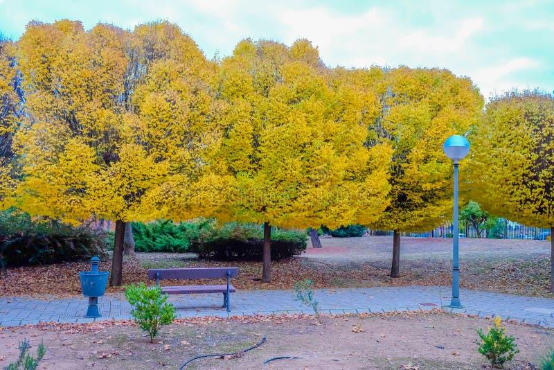 Прогулка по парку с деревьями осенью стоковая фотография rf