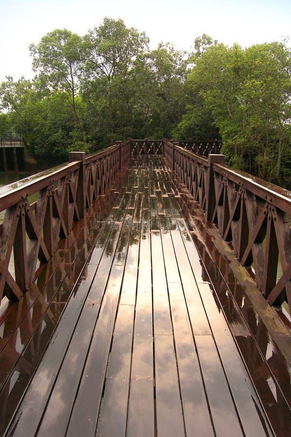 прогулка природных ресурс ресурсов мангров стоковые изображения rf