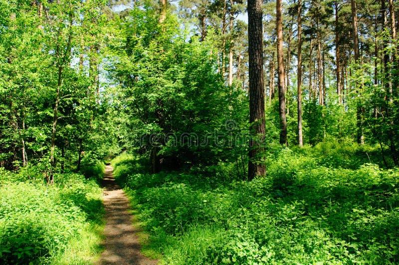Download прогулка пущи чудесная стоковое изображение. изображение насчитывающей sunlight - 6867273