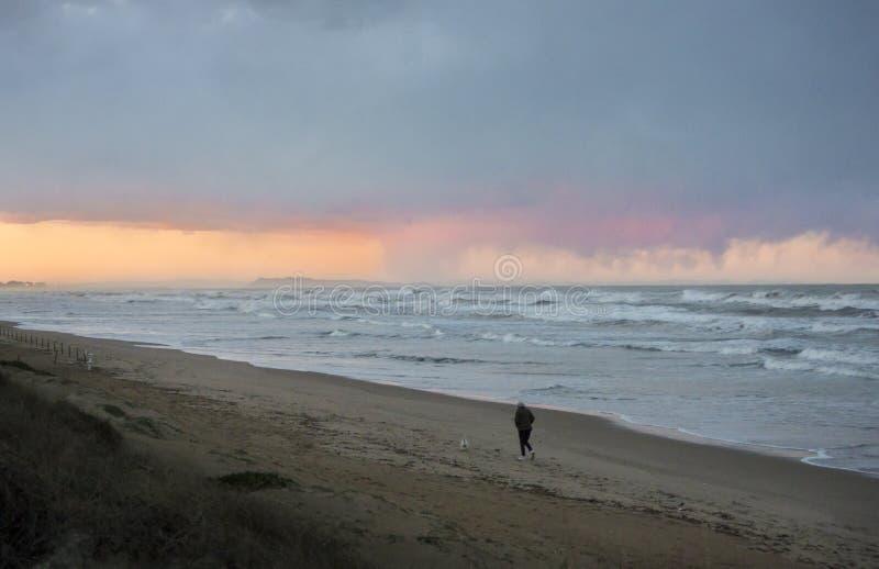Прогулка собаки на бурном пляже стоковые изображения rf