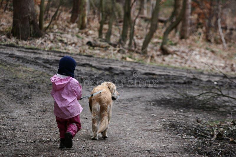прогулка собаки стоковое изображение rf