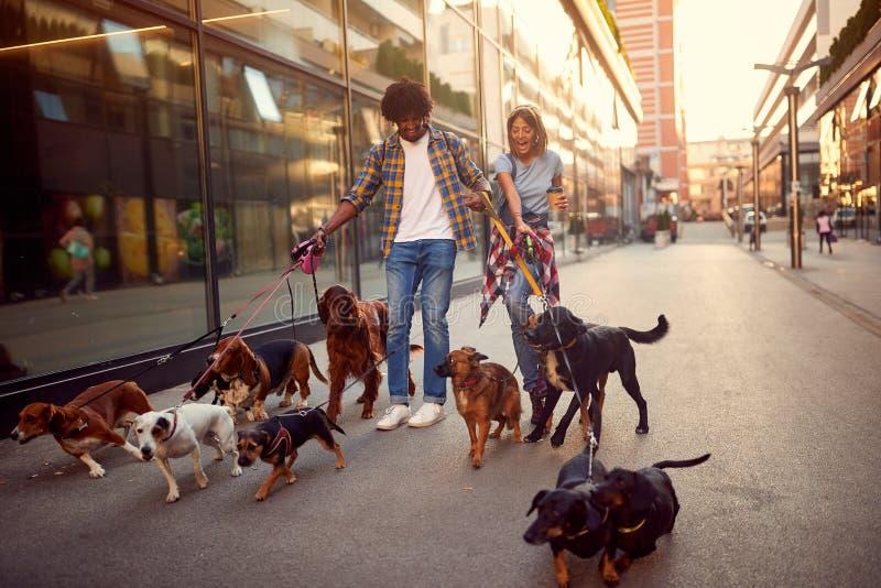 Прогулки собак девушки и человека ходока собаки и наслаждаться outdoors стоковое изображение