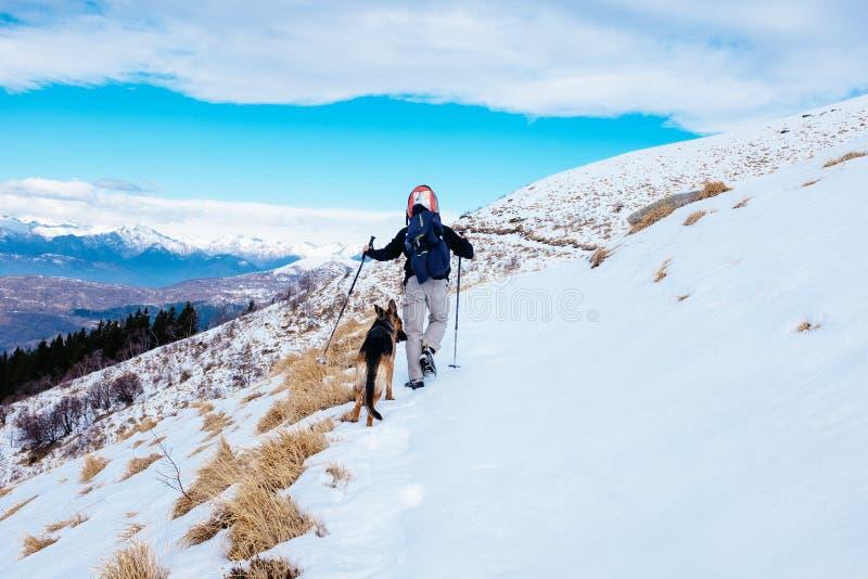 Прогулки Hiker в покрытой снег горе с его немецкой овчаркой делают стоковые фотографии rf