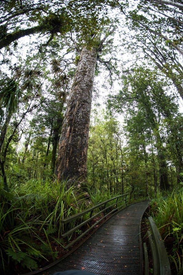 Прогулка леса стоковая фотография