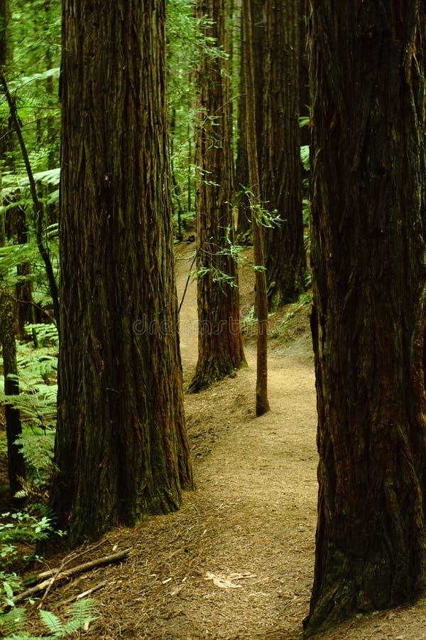 Прогулка 1 леса стоковые фотографии rf