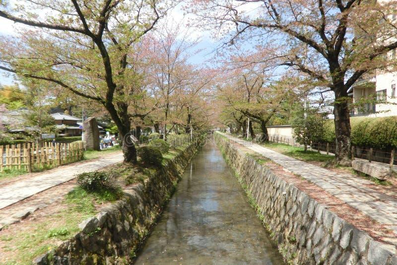 Прогулка Киото Япония ` s философа стоковые изображения rf