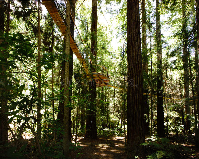 Прогулка 4 неба леса стоковая фотография