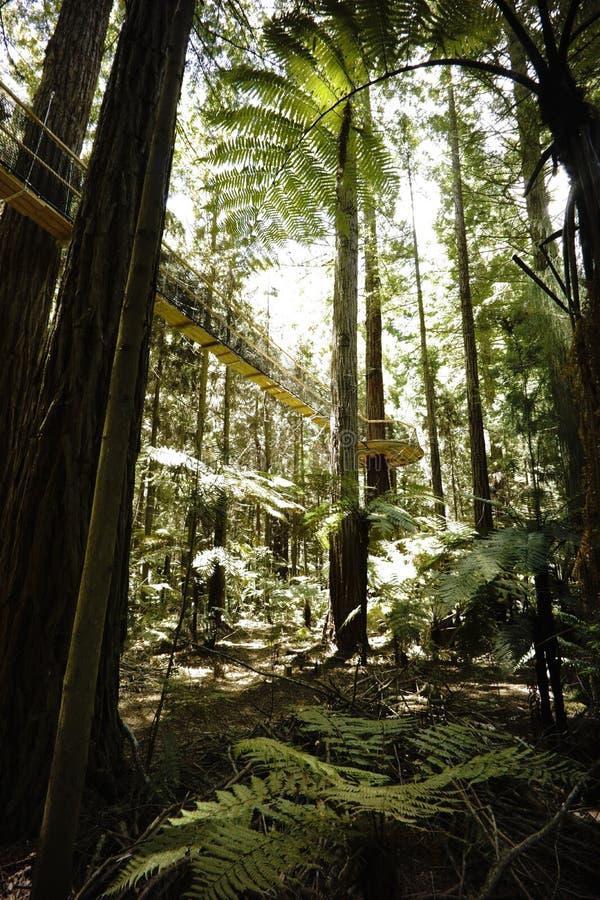 Прогулка 2 неба леса стоковое изображение