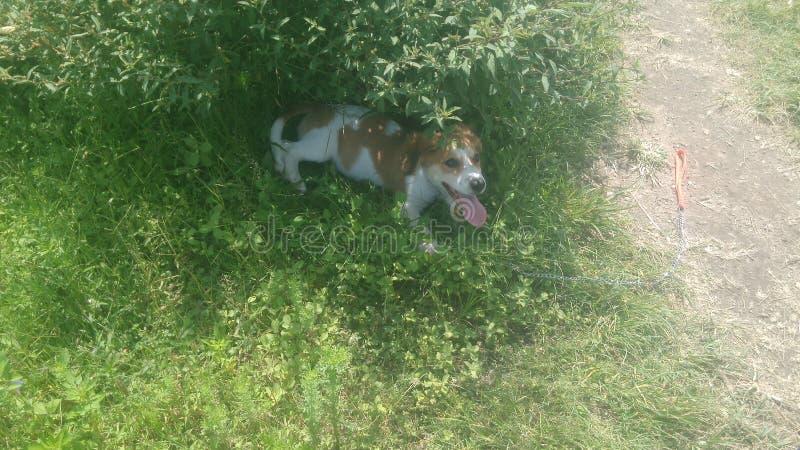 Прогулка с моей собакой стоковые изображения