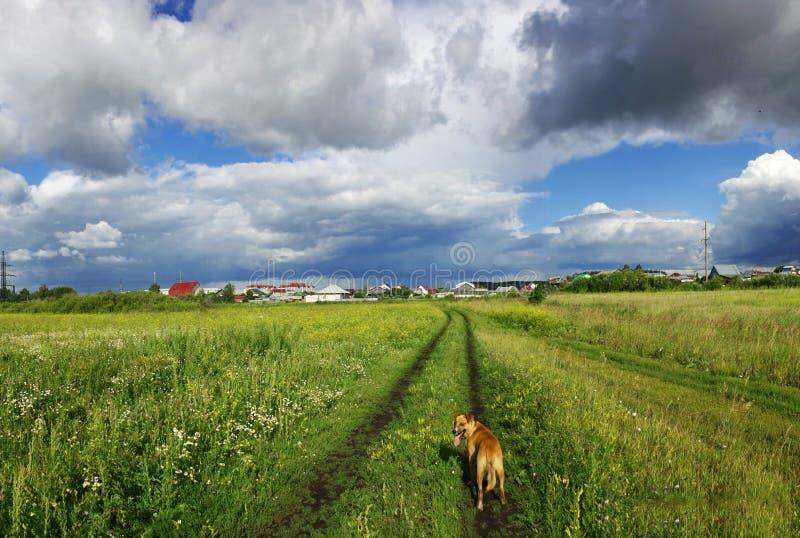 Прогулка через поле с собакой стоковые фотографии rf