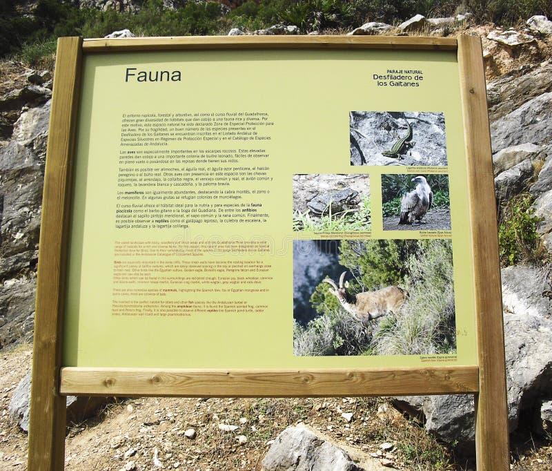 Прогулка malaga Андалусия ` s короля стоковое изображение rf