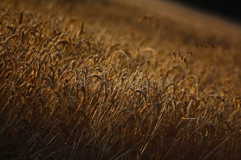 Прогулки сельской местности Чешира стоковые фотографии rf