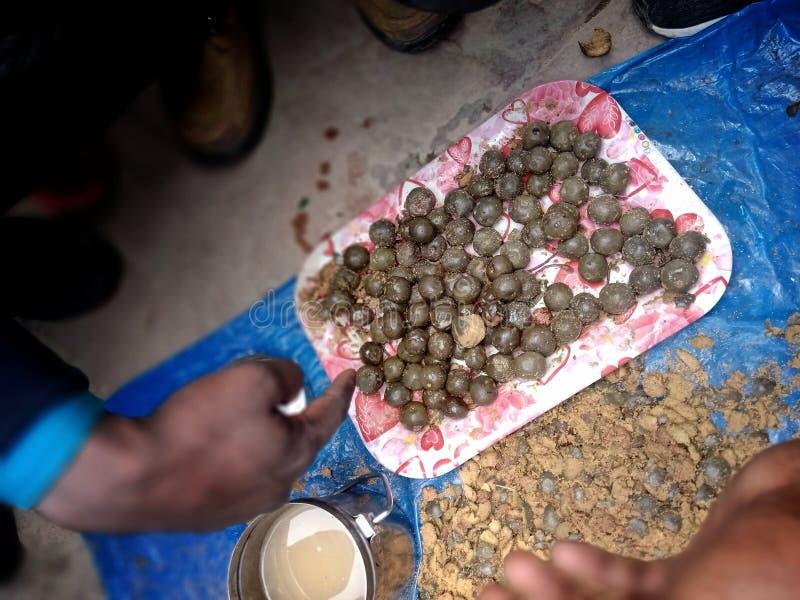Продавец продает камень Рудракша, который очень трудно купить Редко видели рудракш на продажу стоковое фото rf