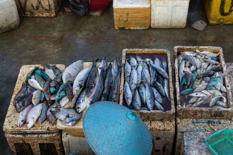 Продавцы рыбы в рыбном базаре Бали jimbaran Он продает различные типы свежих рыб которые как раз улавливали стоковое фото