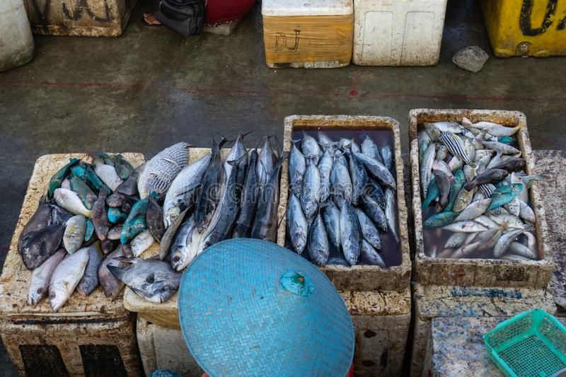 Продавцы рыбы в рыбном базаре Бали jimbaran Он продает различные типы свежих рыб которые как раз улавливали стоковые изображения