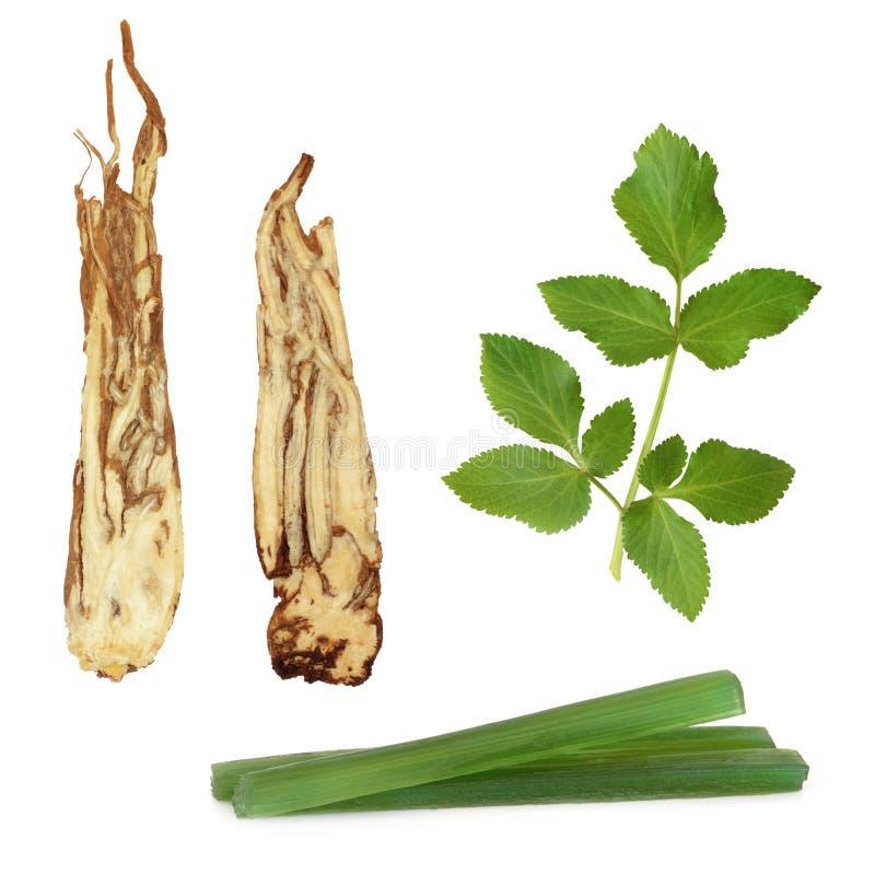 продукты травы дягиля стоковые фотографии rf