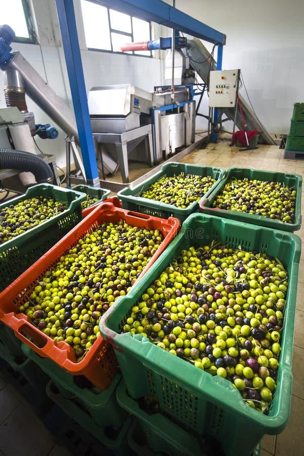 Продукция дополнительного виргинского оливкового масла, холодный обрабатывать стоковая фотография