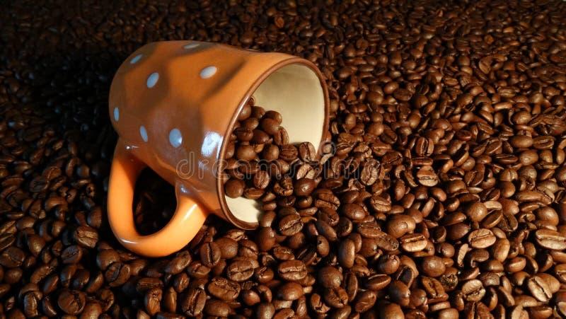 Прозрачные чашка и кофейные зерна, эспрессо кофе стоковые фотографии rf