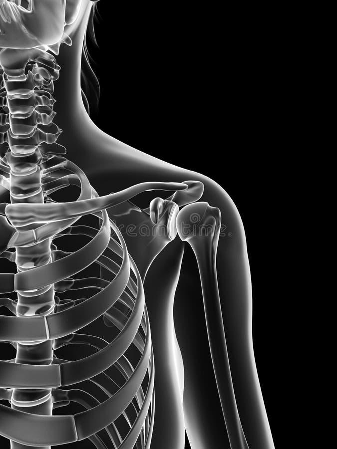 Прозрачный женский скелет - соединение плеча иллюстрация штока