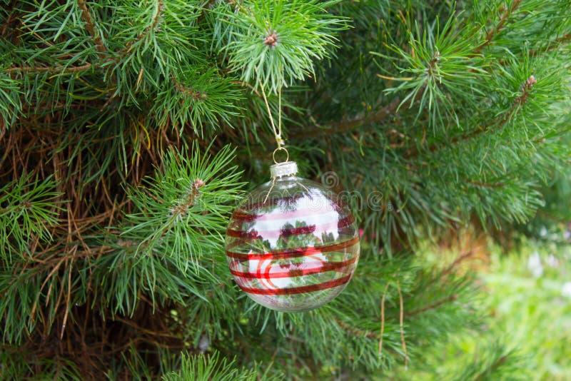 Прозрачный шарик рождества с красными нашивками на пушистом branc сосны стоковое изображение rf
