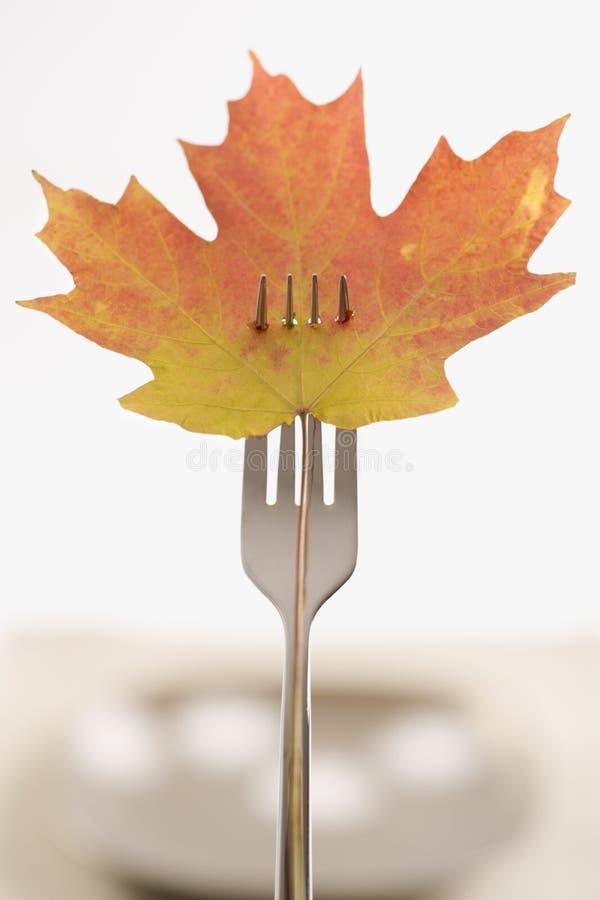 прокалыванный клен листьев вилки стоковые изображения rf