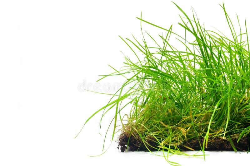 прокладка травы стоковое изображение rf