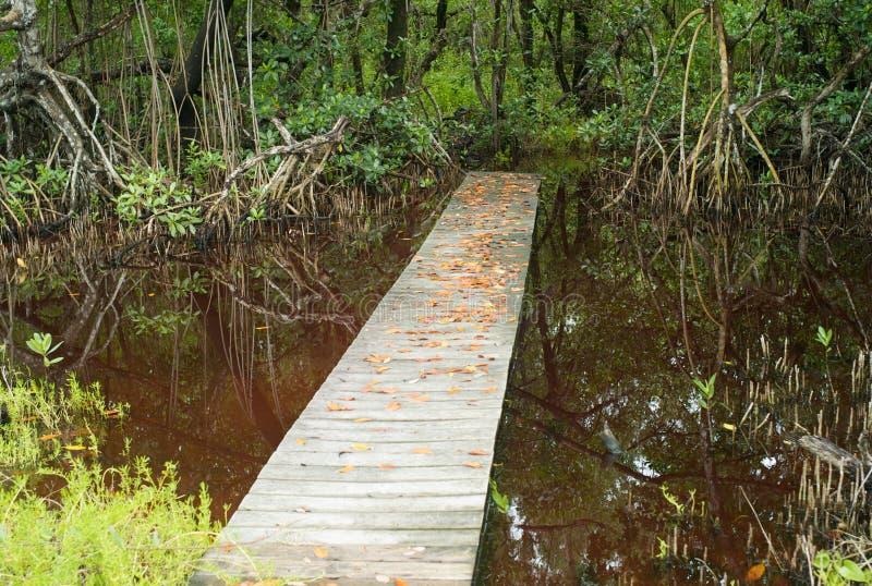 Променад в болотистых низменностях, Флориде стоковые фото
