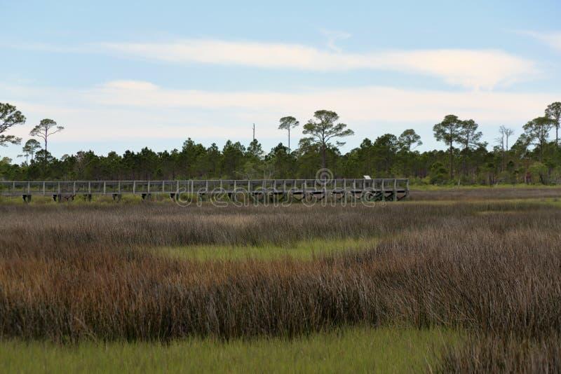 Променад через деревья и травы в болоте соленой воды стоковые фото