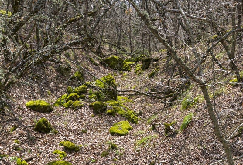 Промоина в лесе горы стоковое фото rf