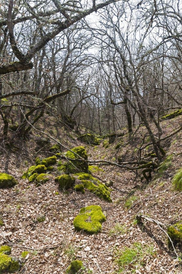 Промоина в лесе горы стоковые изображения