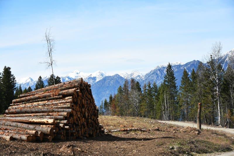 Промышленные вносить в журнал и обезлесение стоковые изображения rf