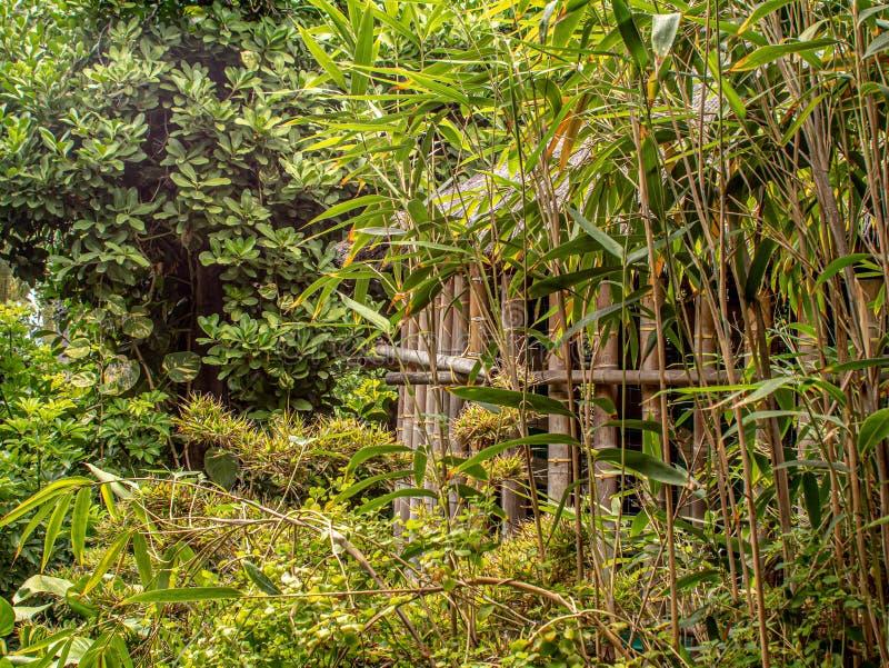 Проницательность в глубокие джунгли с хижиной стоковые фотографии rf