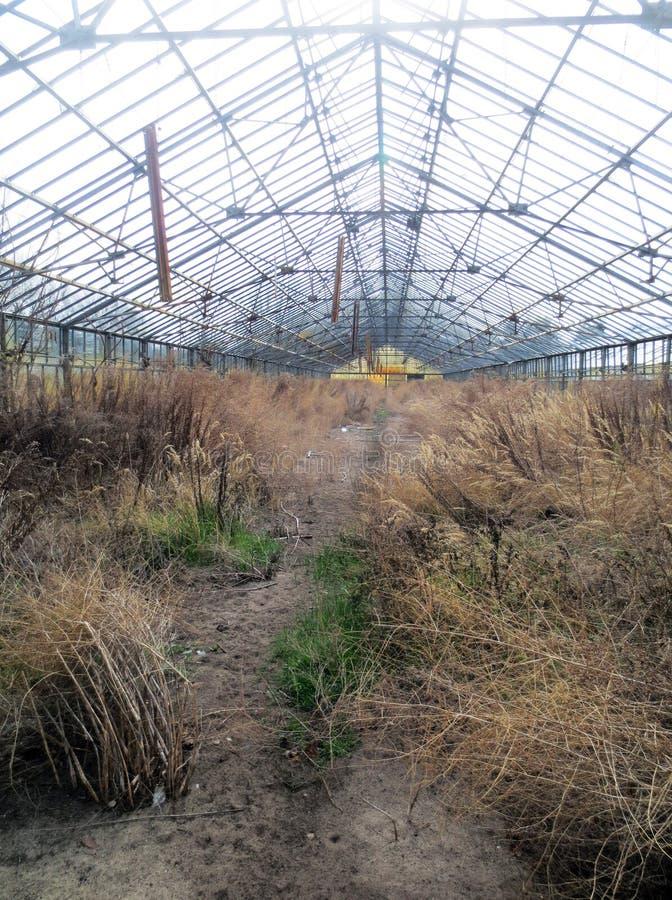 Проницательность в покинутый садовничать стоковое изображение
